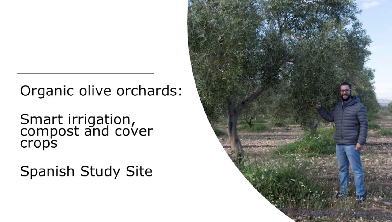 Spain Study Site video olive title
